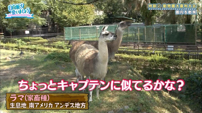 https://livedoor.blogimg.jp/hinatazakakoi/imgs/2/3/2341503b.jpg