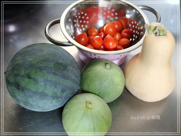 こだますいか&メロンなど。夏野菜の収穫