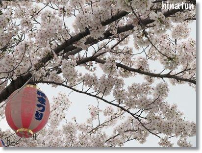 春まつり ~ 市民の森 羽島公園 ~