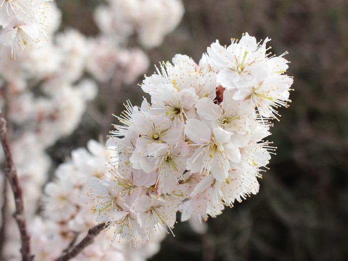 今年初めての桜。今日の嬉しかったこと