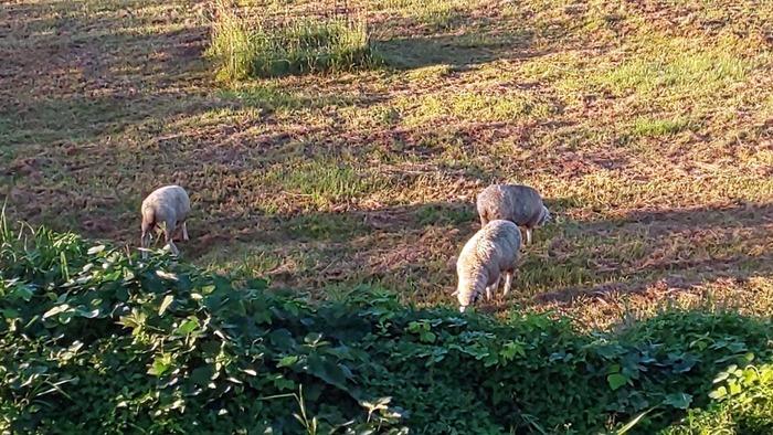 0925羊