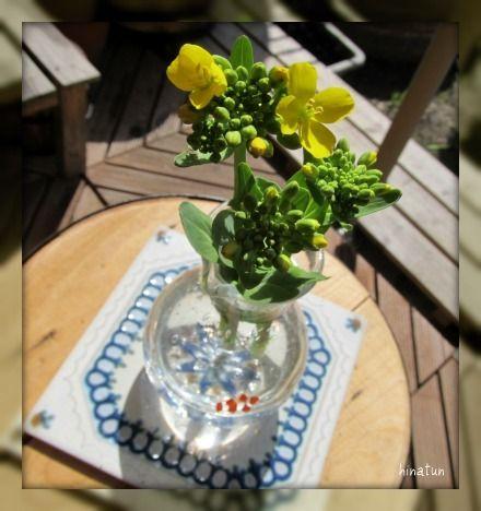 ひなちゅんの!なちゅらる日記-ミニ青梗菜の花