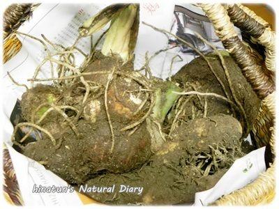 里芋&自然薯