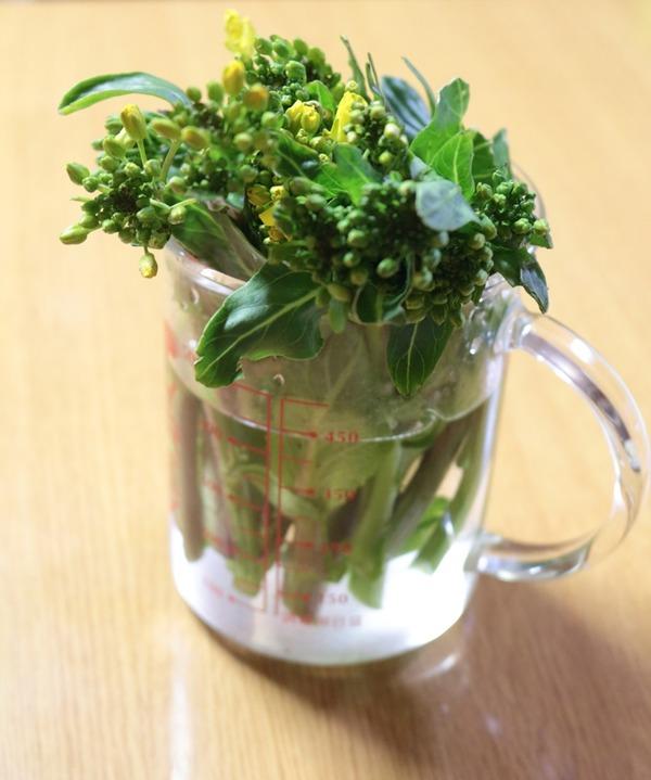 菜の花_1000
