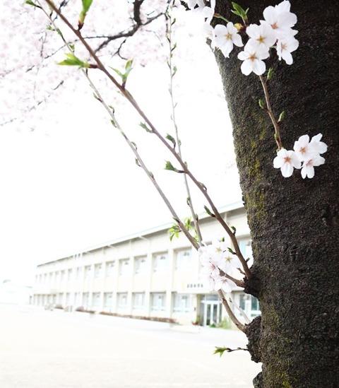 さくら み さんぽ 2016