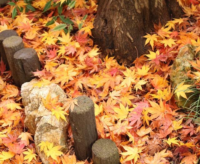 落ち葉の絨毯2