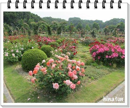 世界に誇るバラ園「花フェスタ記念公園」 (1)
