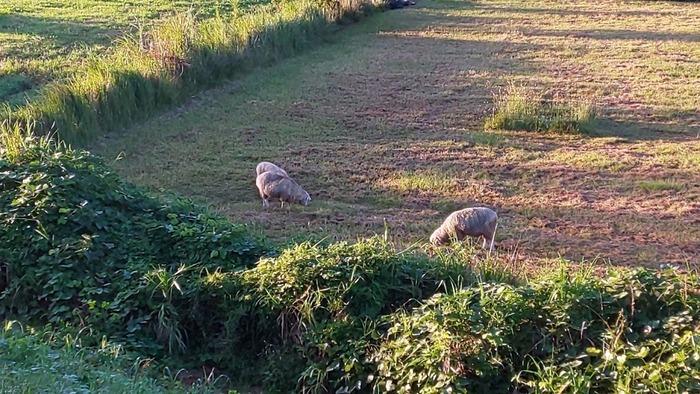 0925羊2