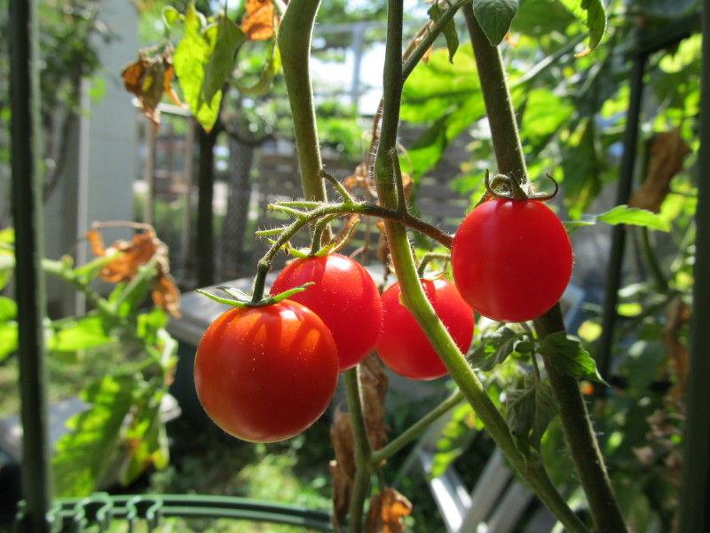 炊き込みご飯☆トマトとモロヘイヤのお素麺