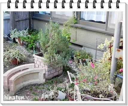 紫陽花の移植と新たなお庭