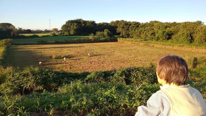 堤防下(河川敷)に羊がいた!!!