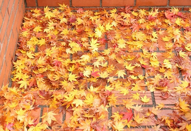落ち葉の絨毯3