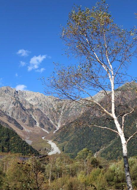 穂高連峰と白樺の木