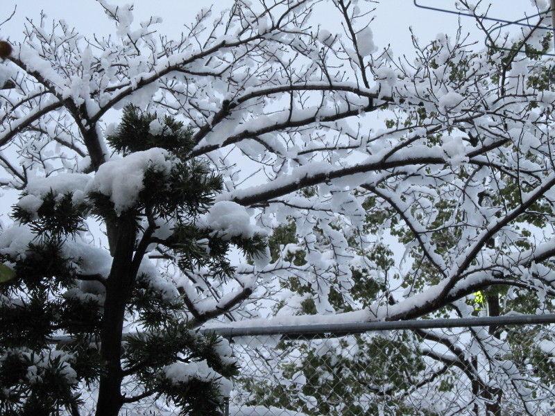 ☆ホワイトクリスマス☆