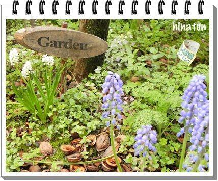 ひなちゅんの!なちゅらる日記-雨上がりの庭