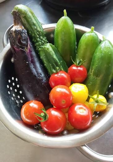 今年の夏野菜たち(2)
