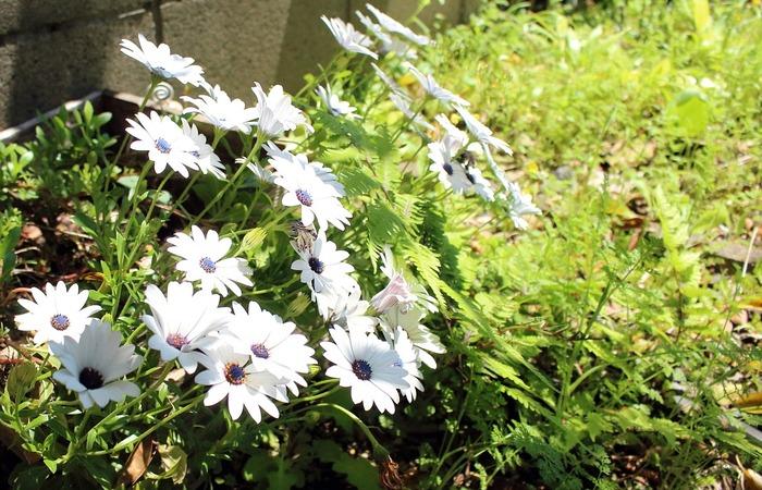5月の庭(南側)