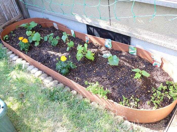 生ごみから堆肥に!夏野菜を植えました☆今年のキッチンガーデン