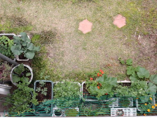 0516プランター菜園