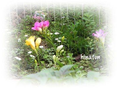 花の咲く庭♪