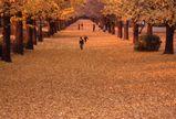 落ち葉の絨毯(撮影;長井 太一郎さん)