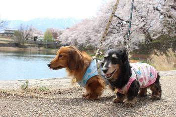 長坂湖畔−3