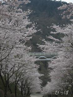 愛川公園−1