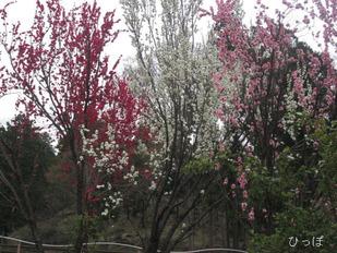 愛川公園−4