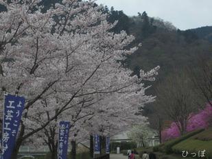 愛川公園−2
