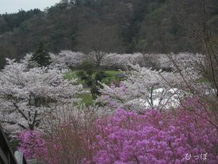 愛川公園−3