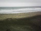 海と海猫達。
