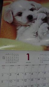 斉藤歯科のカレンダー  2