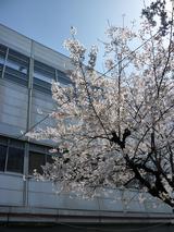 枚方市駅と桜  '10  その1