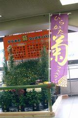 ひらかたの菊 07−3