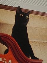 黒猫・マルバ