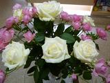 今週の待合の花