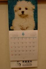 斉藤歯科のカレンダー  2009−6