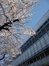 枚方市駅と桜  '10  その2