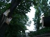 broken tree1