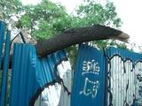 broken tree2