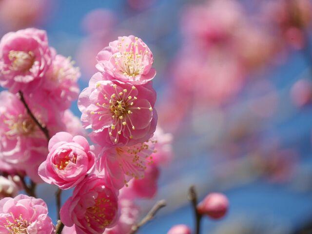 表現 春の 訪れ