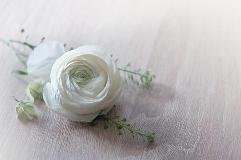 flower-1316753_640
