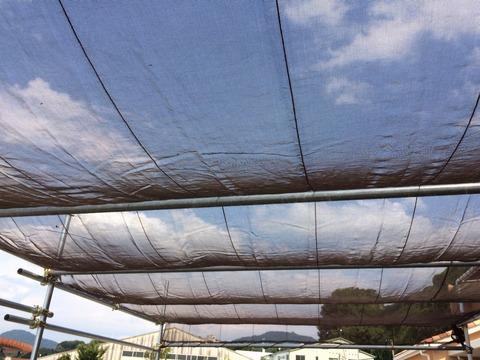 日よけは網で
