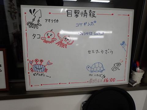 痛いなーこのカニ@平沢マリンセンター (2)