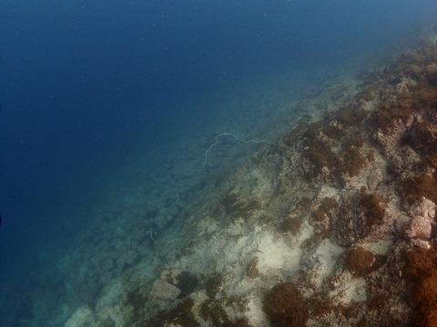 20170514淡島 (7)