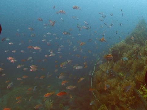 淡島ボートダイブ (2)