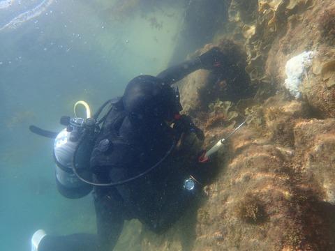 海藻除去作業