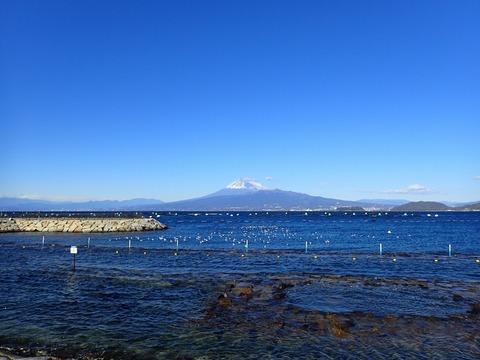 西風が弱まり海面に海鳥たちが@平沢ビーチ