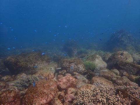 1211東側サンゴ