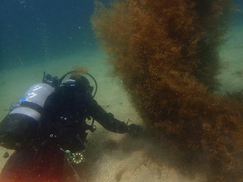さとちゃんと海藻刈り